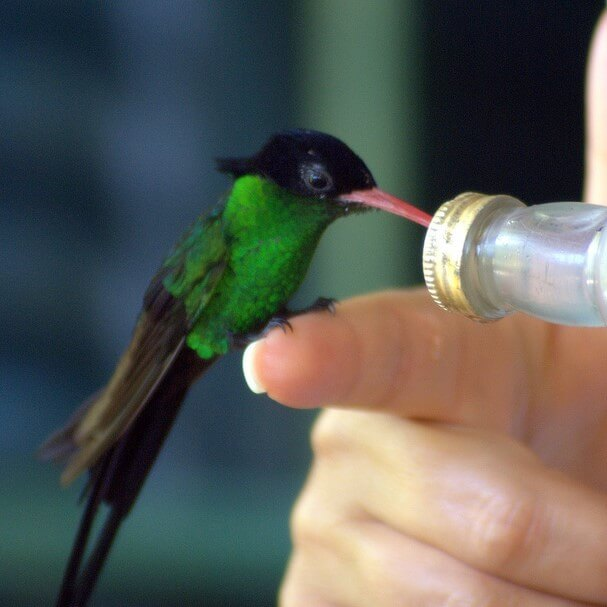 tings to do in Montego Bay. Feeding hummingbirds